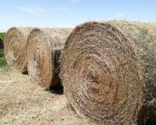 Rollos de Alfalfa 2020