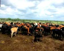 Santiago del Estero Garza Venta Campo Agricola-ganadero