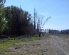 Campo Mixto 82 Has - Sobre Ruta 250 - Choele Choel