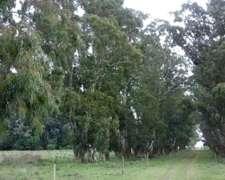 Excelente Campo Mixto a 60 km de Tandil