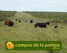 La Pampa - Venta Campo 2.500 Ha - Financia 3 Años Kg Novillo