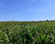Vendo Excelente Campo Agricola