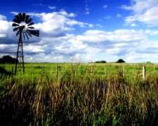 Recibo Hacienda A Pastaje O A Porcentaje Buen Campo 400has