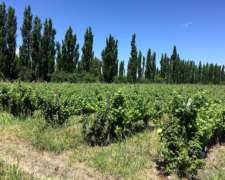 Bodega Importante en Mendoza con Cava 3.000.000 de Botellas