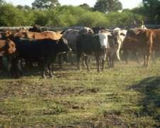Permuto Terrenos En General Vedia (pueblo) Por Hacienda
