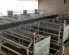 Granja Porcina Nueva. Capacidad De 70 A 100 Madres.