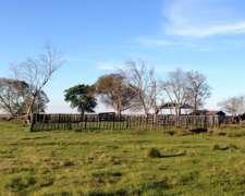 Vendo 1600 Has Ganaderas en Corrientes