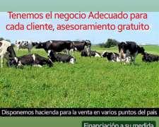 Tambos En Venta ( Vacas Vaquillonas Terneras)