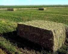 Mega - Fardos de Alfalfa Lasna