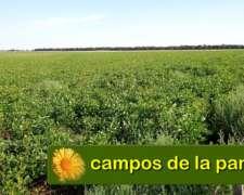 La Pampa - Venta 610 Ha Cultivables - 2 Años de Financiación