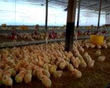 Granja Avícola, Capacidad 90.000 Pollos Arrecifes
