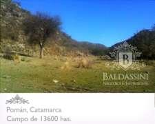 Campo Ganadero De 13600 Has En Pomán - Catamarca