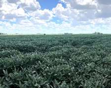 Busco Campo Agrícola para Arrendar Hasta 2500ha