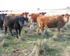 Estancia el Destino 650ha - (para 650 Vacas)