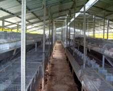 Jaulas E Instalaciones Le Clapier Para Conejos