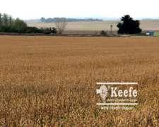 100 Has. en Tandil, Sobre Ruta - 60 % Agrícolas