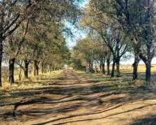 Busco Campo Agrícola en Alquiler
