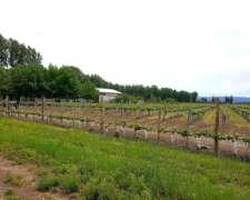30 Has Finca Sobre Ruta con Viñedos en Tupungato