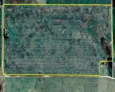 90 Has. Campo 100 % Agricola Clase III en Necochea