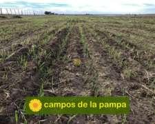La Pampa - Venta 260 Ha - Cultivable - Zona Macachín
