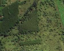 113 Hectáreas con Plantación Forestal, Sobre Río Gutierrez.