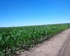 Oportunidad, Agrícolas, SGO del Estero