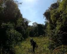 Joyita de Bosque Nativo en San Ignacio, Misiones