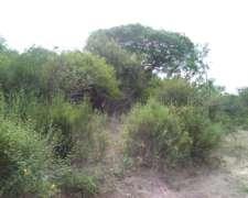 Campo de 1740 Has en Laguna Yema Provincia de Fomorsa