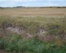 Campo en Tres Arroyos Zona la Tigra