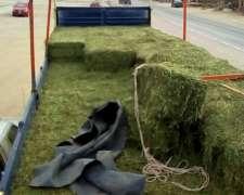 Alfalfa Cuf 101en Fardo