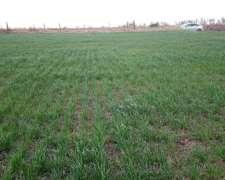 Campo Agricola 100% - 150 Hectareas