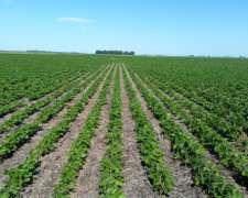 Excelente Campo Agricola y Mixto