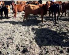 Vendo Jaula Simple Vacas