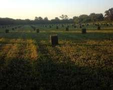 Fardos De Alfalfa Verde Y Otros