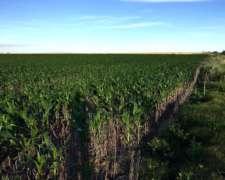 70 Has Agrícolas, Irazusta, Gualeguaychú, Entre Ríos.