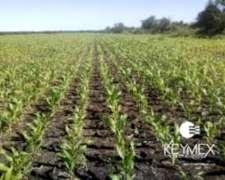 Busco Campo Agricola o Mixto para Alquilar (50-150 Has)