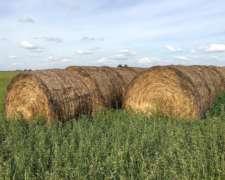 Vendo Rollos Nuevos de Alfalfa
