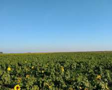 400 Has Agrícolas Pehuajo- Trenque Lauquen - Juan Jose Paso