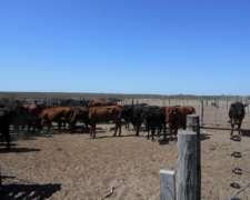 30.000 Has Ganaderas en Planicie Curacó, la Pampa