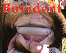 Prótesis Dentales Bovinas Bovident