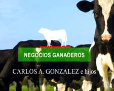 Tambos en Venta ( Vacas Vaquillonas Terneras) Consúltenos