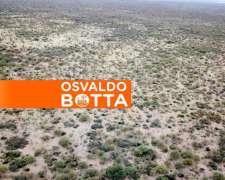 600 Hectáreas en Bernasconi, la Pampa
