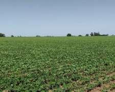 50 Ha Agrícolas San Nicolás