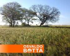230 Has, Santa Rosa, la Pampa