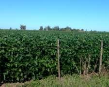 180 Ha Agricolas Pergamino