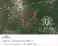 Campo de 1025 Has en Laprida - Choya - Santiago del Estero