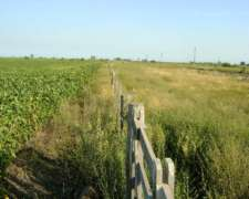 Campo Agricola Ganadero en Arrendamiento