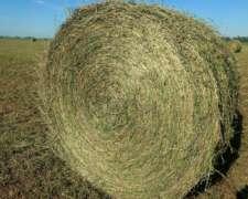 Rollos de Alfalfa Pura 2020