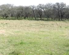 Campo en Venta en Intendente Alvear. 667 Has. Mixto