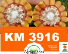 Semilla de Maiz KM3916 GL Stack - Semillero KWS